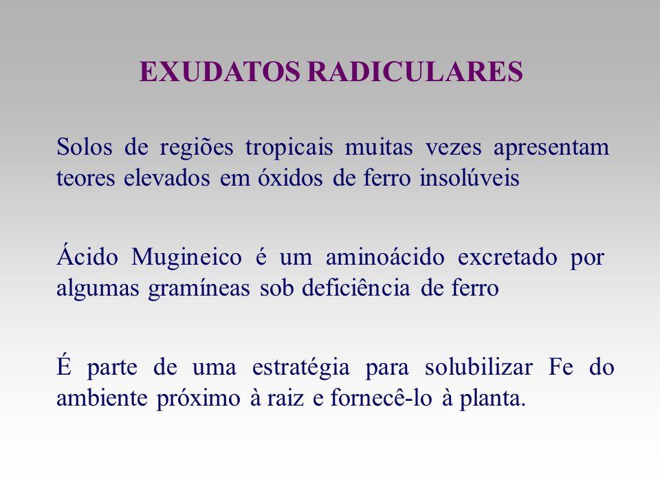 EXUDATOS RADICULARES Solos de regiões tropicais muitas vezes apresentam teores elevados em óxidos de ferro insolúveis.
