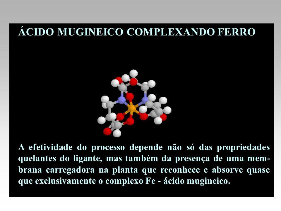 ÁCIDO MUGINEICO COMPLEXANDO FERRO