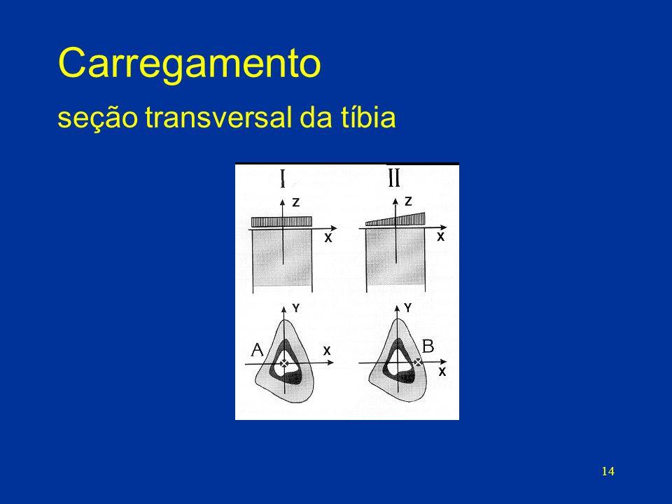 Carregamento seção transversal da tíbia