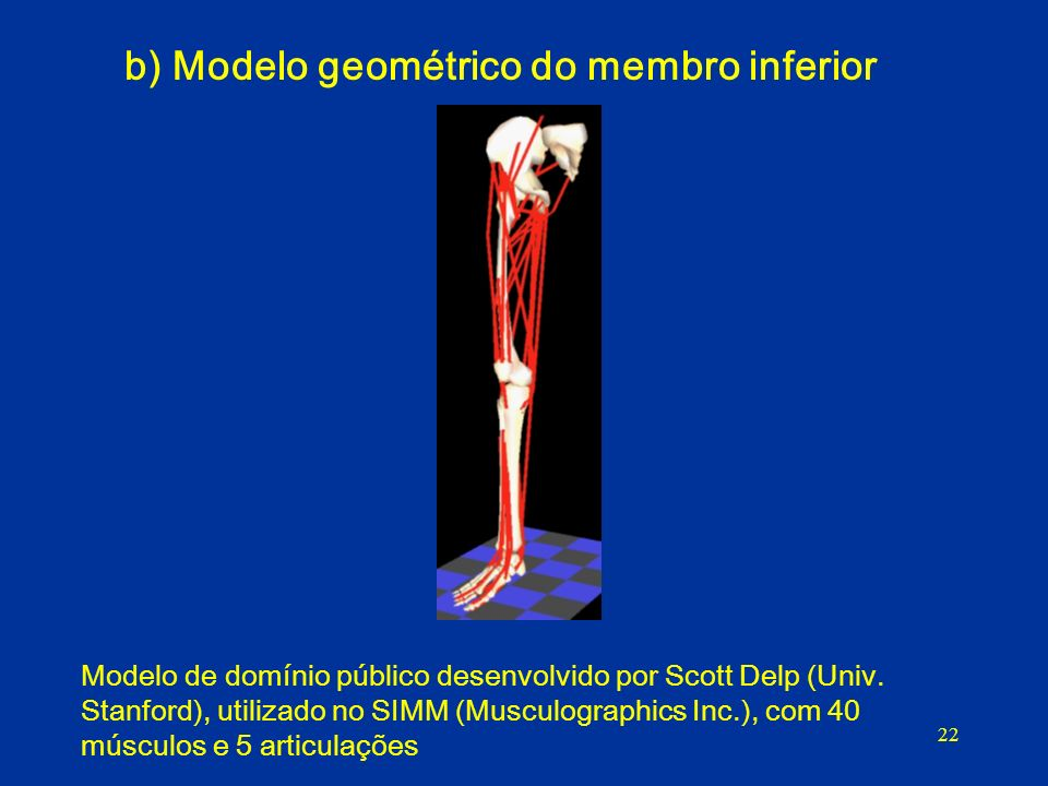 b) Modelo geométrico do membro inferior
