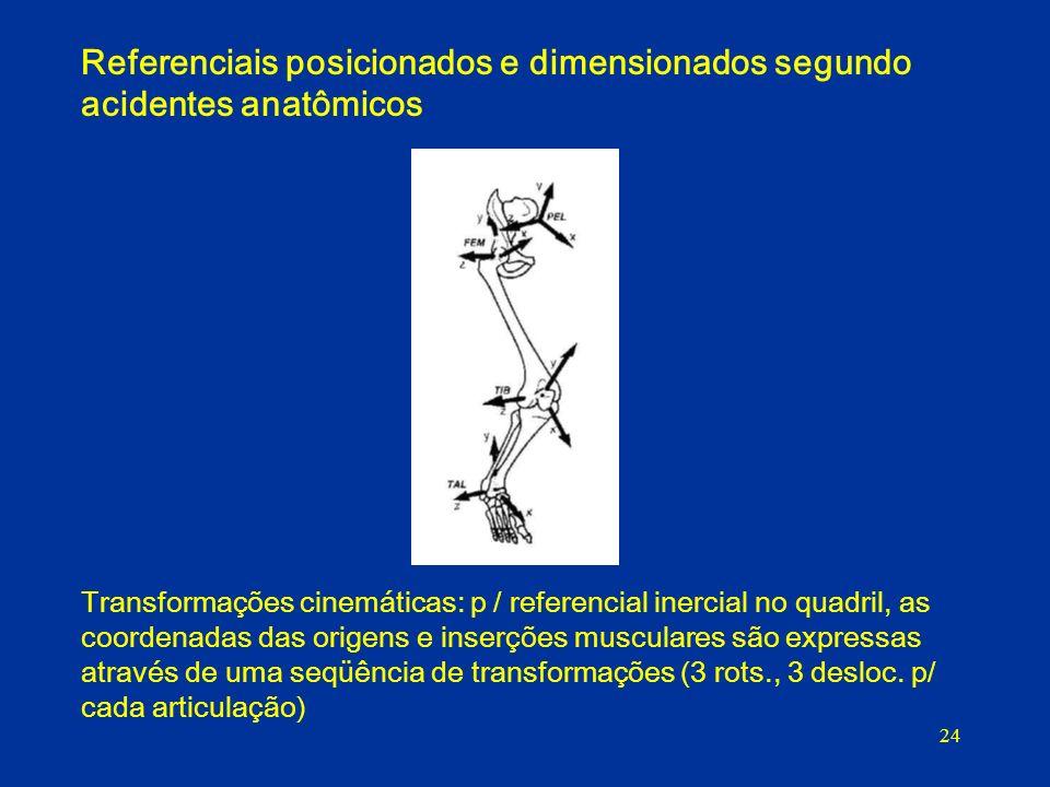 Referenciais posicionados e dimensionados segundo acidentes anatômicos