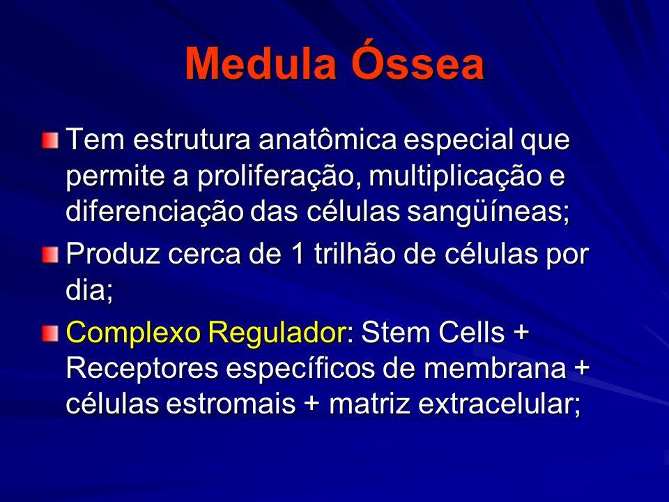 Medula Óssea Tem estrutura anatômica especial que permite a proliferação, multiplicação e diferenciação das células sangüíneas;