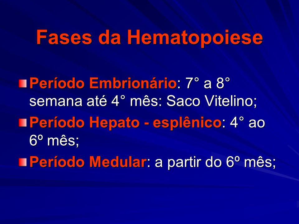Fases da Hematopoiese Período Embrionário: 7° a 8° semana até 4° mês: Saco Vitelino; Período Hepato - esplênico: 4° ao 6º mês;