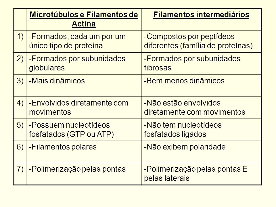 Microtúbulos e Filamentos de Actina Filamentos intermediários 1)