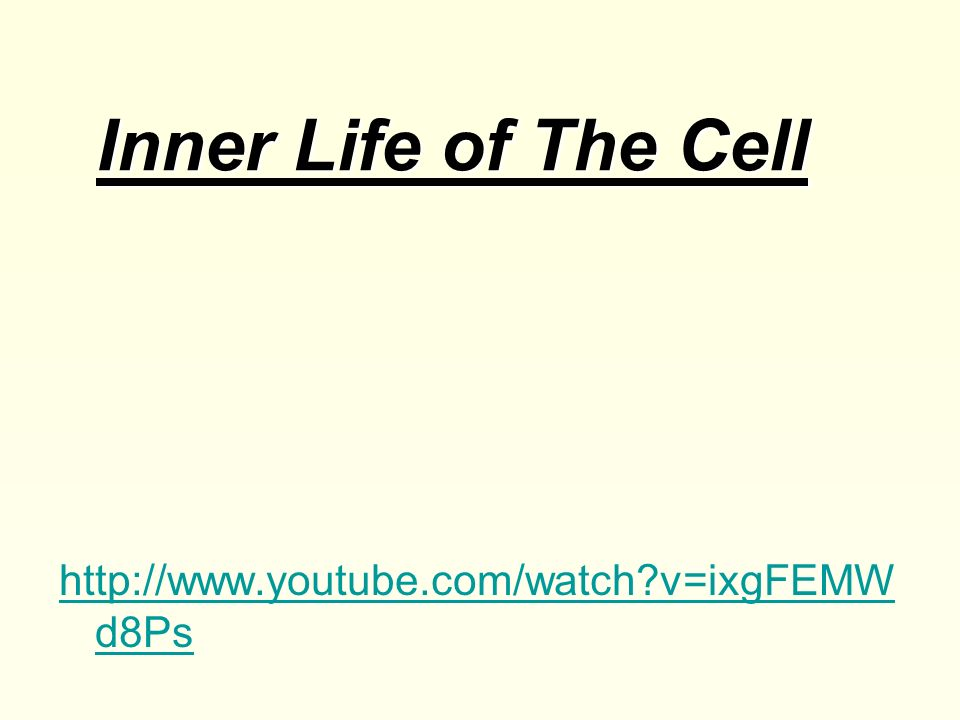 Inner Life of The Cell http://www.youtube.com/watch v=ixgFEMWd8Ps