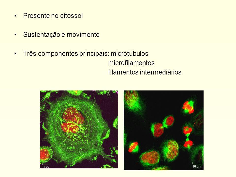Presente no citossol Sustentação e movimento. Três componentes principais: microtúbulos. microfilamentos.