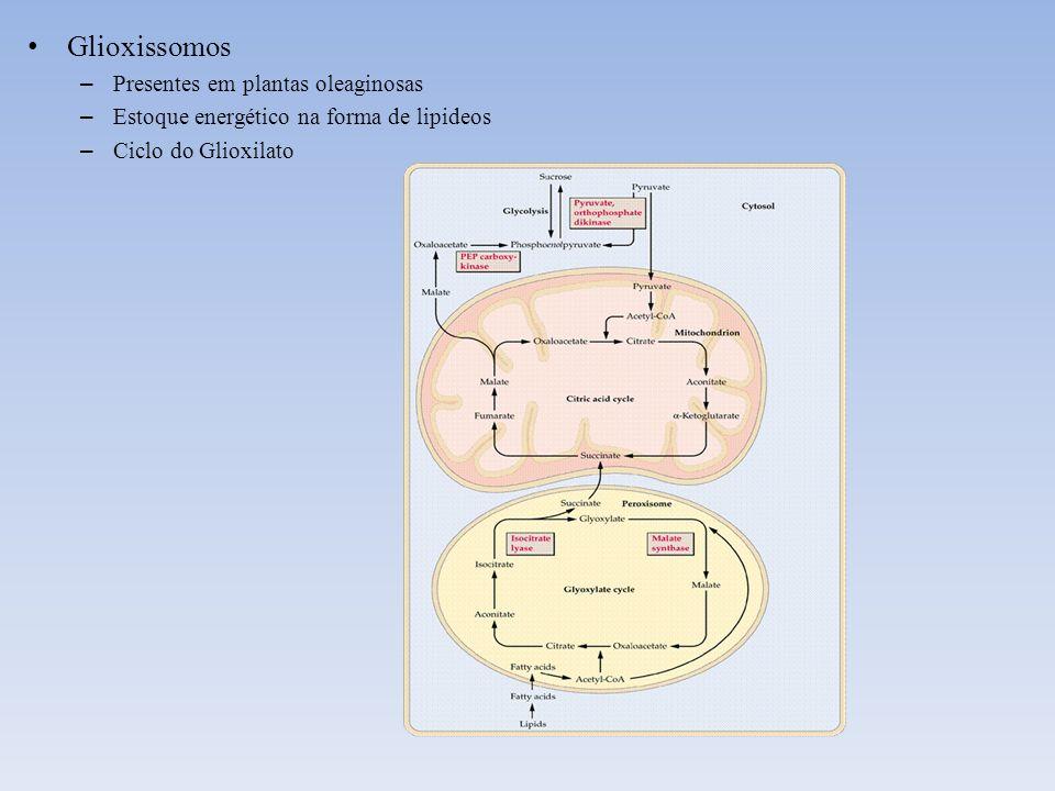 Glioxissomos Presentes em plantas oleaginosas