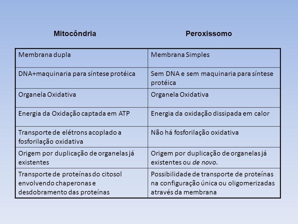 MitocôndriaPeroxissomo. Membrana dupla. Membrana Simples. DNA+maquinaria para síntese protéica. Sem DNA e sem maquinaria para síntese protéica.