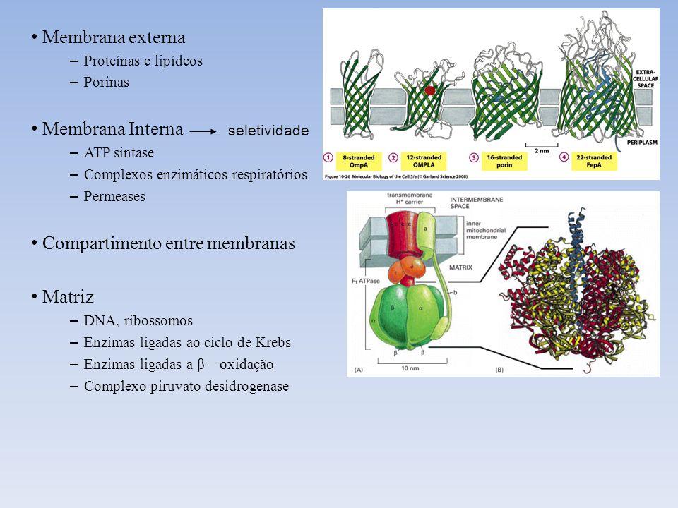 Compartimento entre membranas Matriz