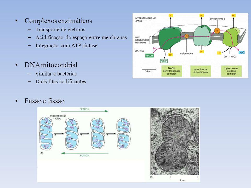 Complexos enzimáticos