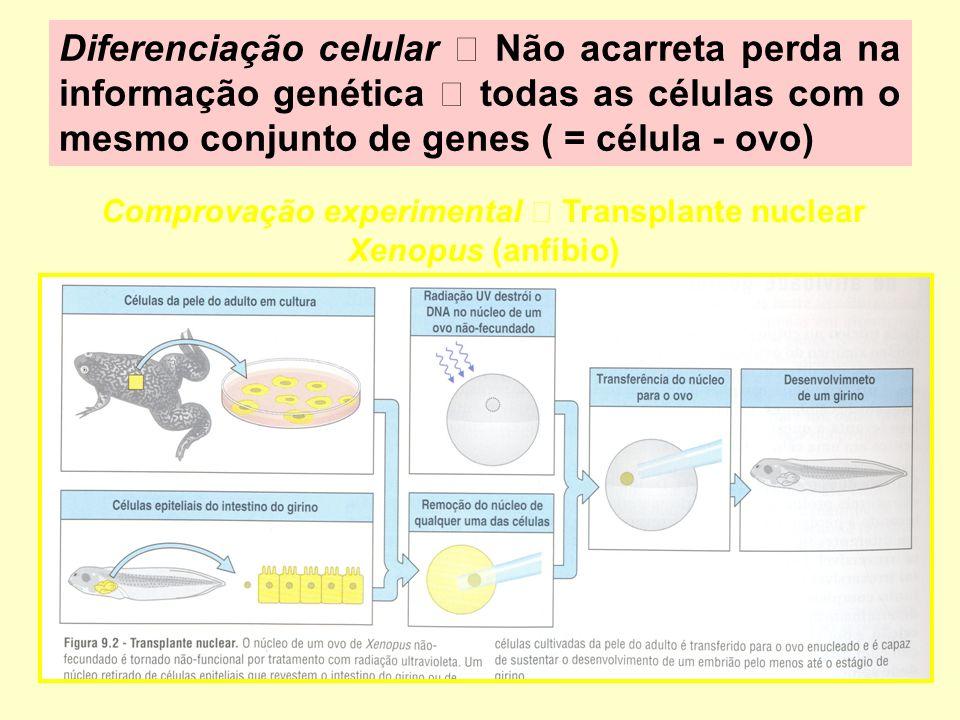 Comprovação experimental  Transplante nuclear