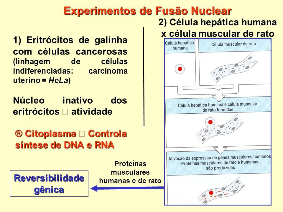 Experimentos de Fusão Nuclear
