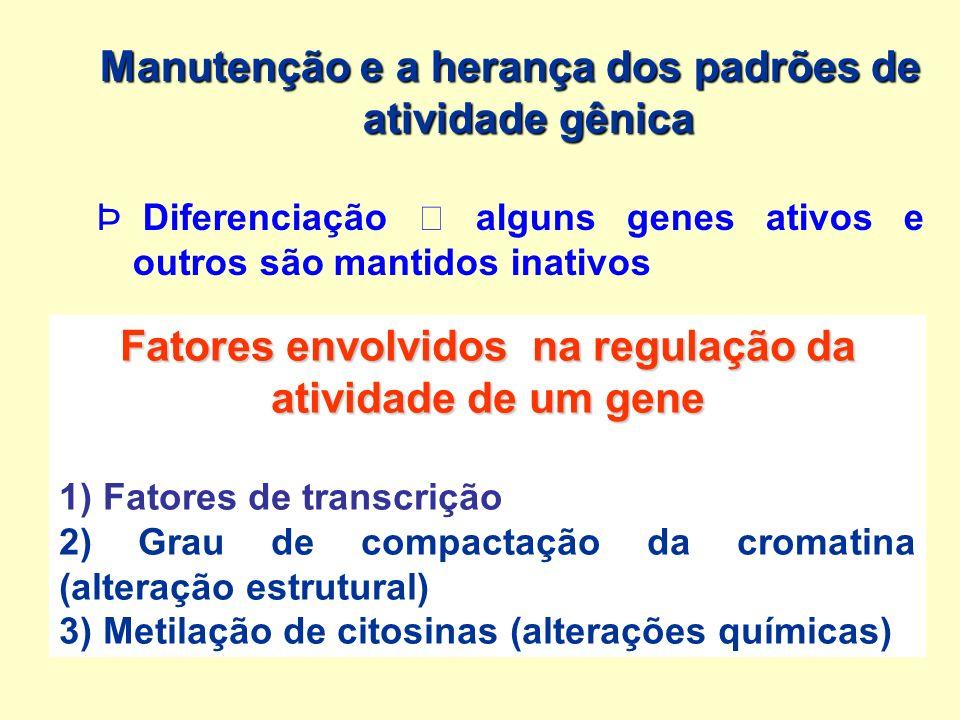 Manutenção e a herança dos padrões de atividade gênica