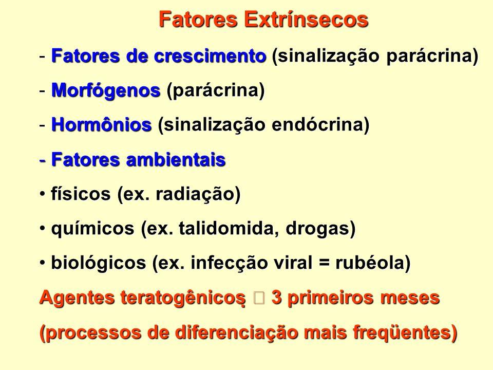 Fatores Extrínsecos Fatores de crescimento (sinalização parácrina)