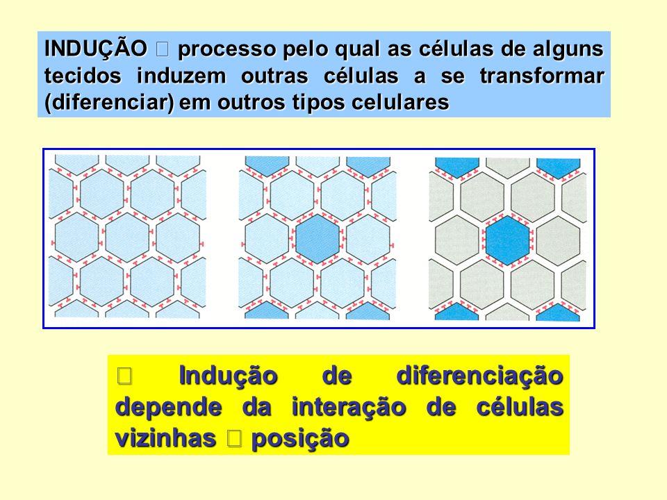 INDUÇÃO  processo pelo qual as células de alguns tecidos induzem outras células a se transformar (diferenciar) em outros tipos celulares
