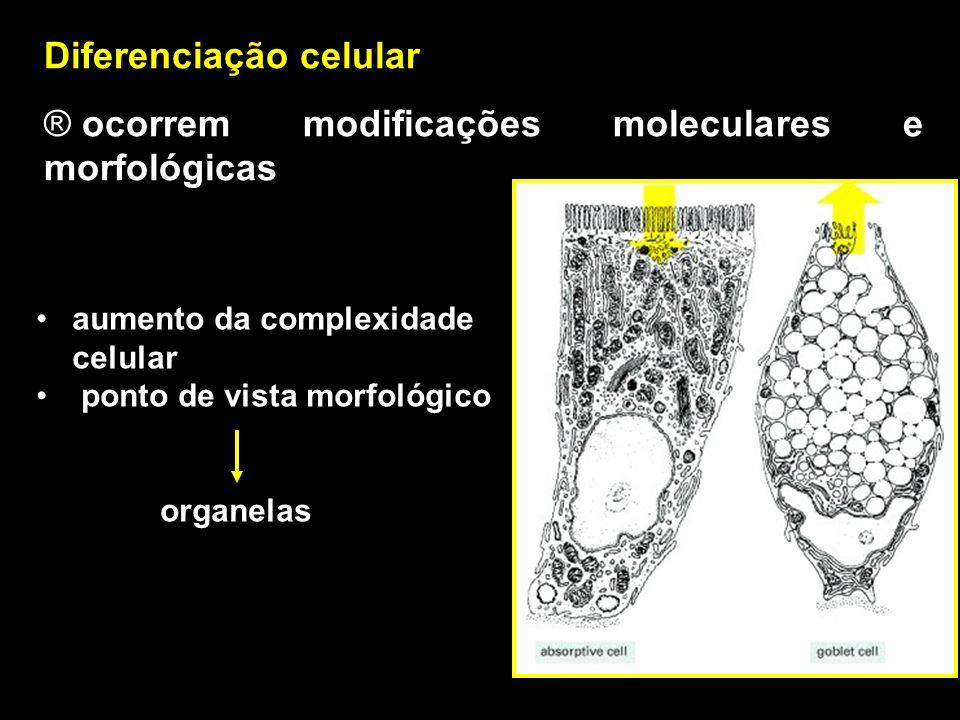 Diferenciação celular ocorrem modificações moleculares e morfológicas