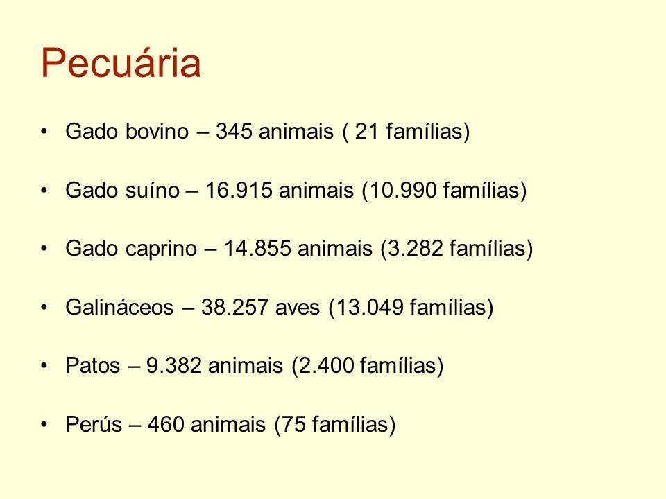 Pecuária Gado bovino – 345 animais ( 21 famílias)