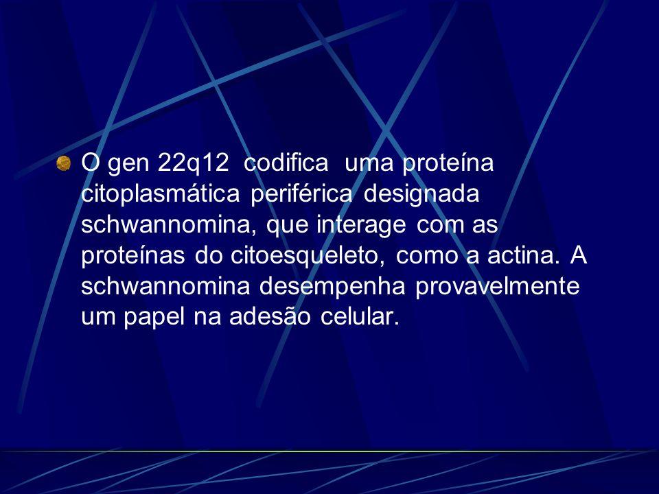 O gen 22q12 codifica uma proteína citoplasmática periférica designada schwannomina, que interage com as proteínas do citoesqueleto, como a actina.