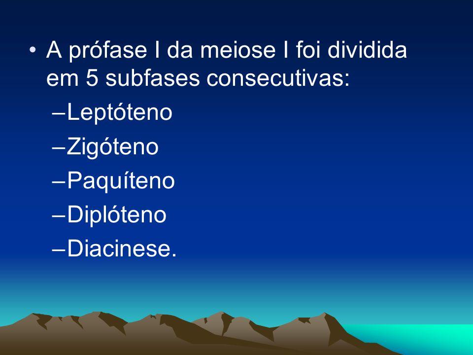 A prófase I da meiose I foi dividida em 5 subfases consecutivas: