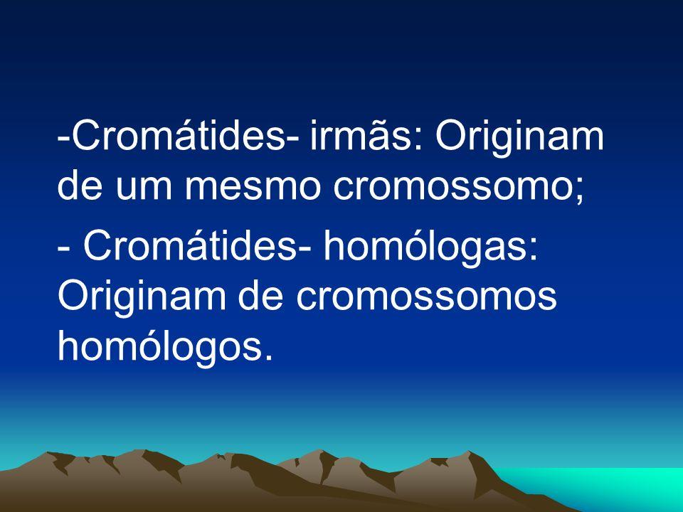 - Cromátides- homólogas: Originam de cromossomos homólogos.