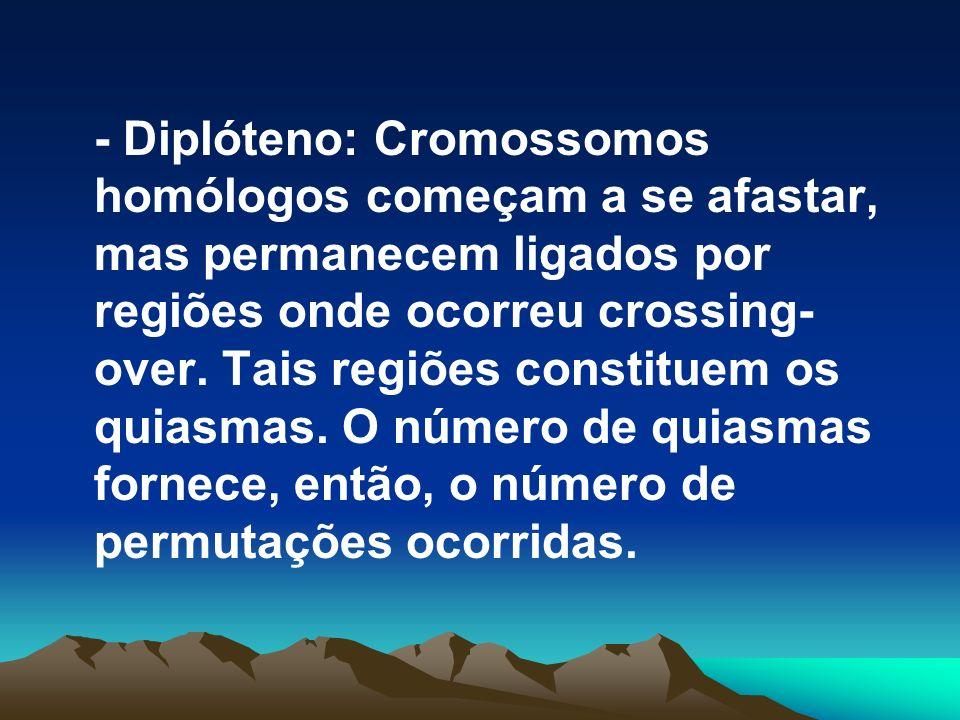 - Diplóteno: Cromossomos homólogos começam a se afastar, mas permanecem ligados por regiões onde ocorreu crossing-over.