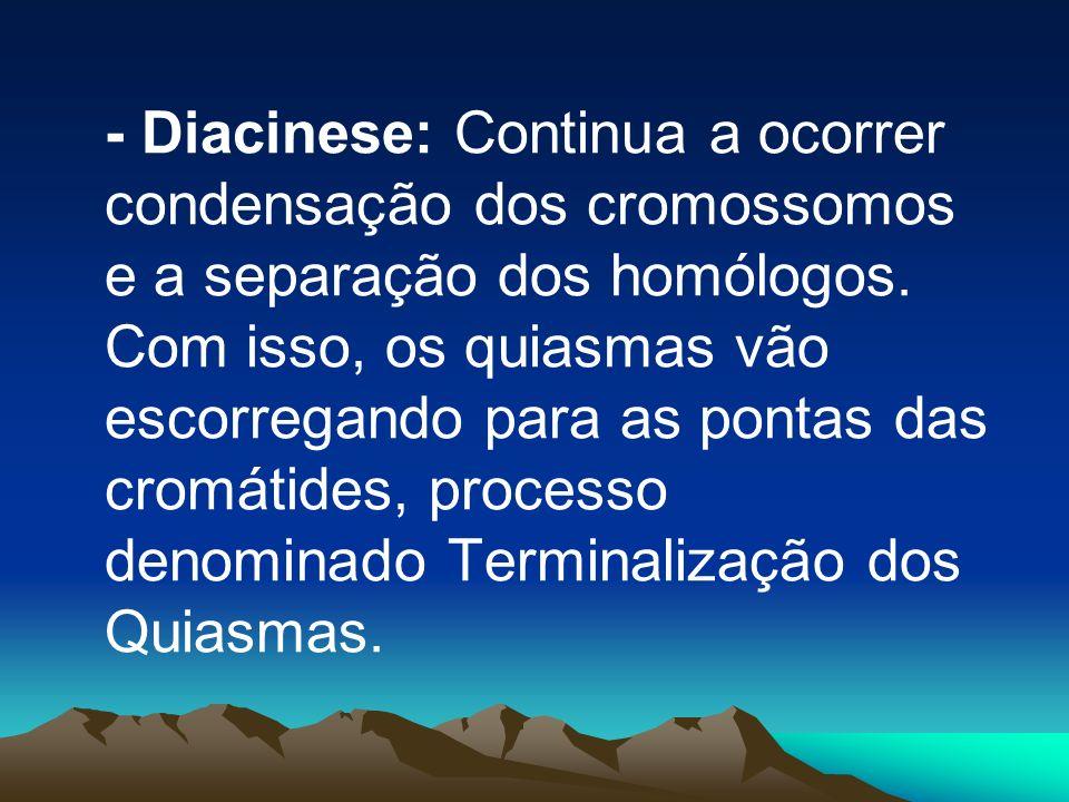 - Diacinese: Continua a ocorrer condensação dos cromossomos e a separação dos homólogos.