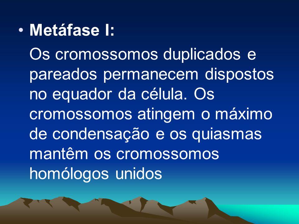 Metáfase I: