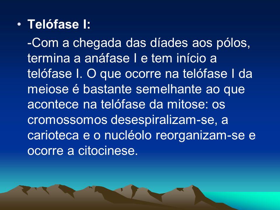 Telófase I: