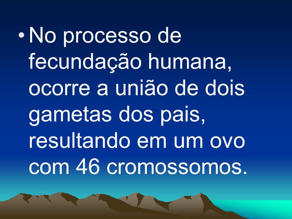 No processo de fecundação humana, ocorre a união de dois gametas dos pais, resultando em um ovo com 46 cromossomos.