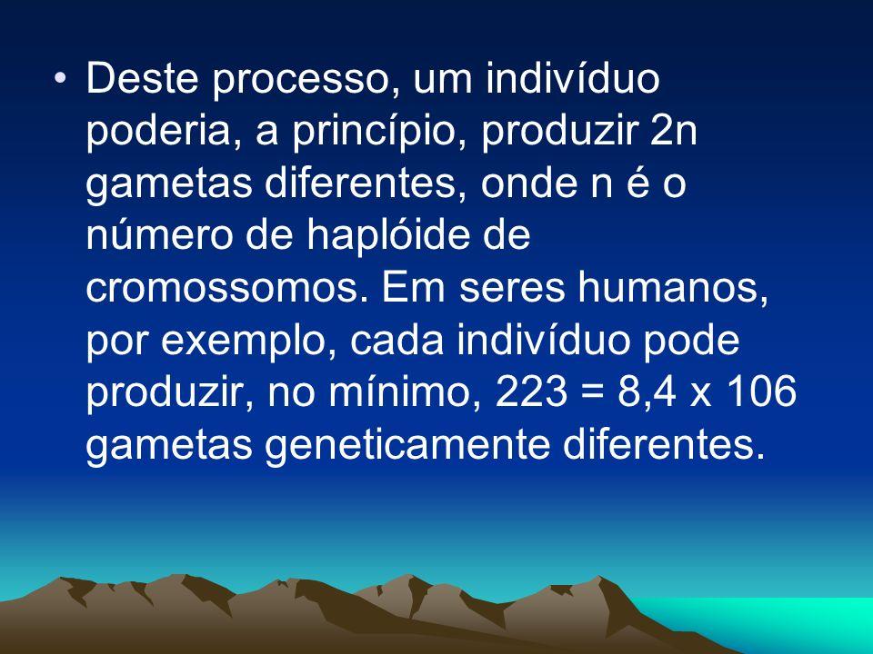 Deste processo, um indivíduo poderia, a princípio, produzir 2n gametas diferentes, onde n é o número de haplóide de cromossomos.