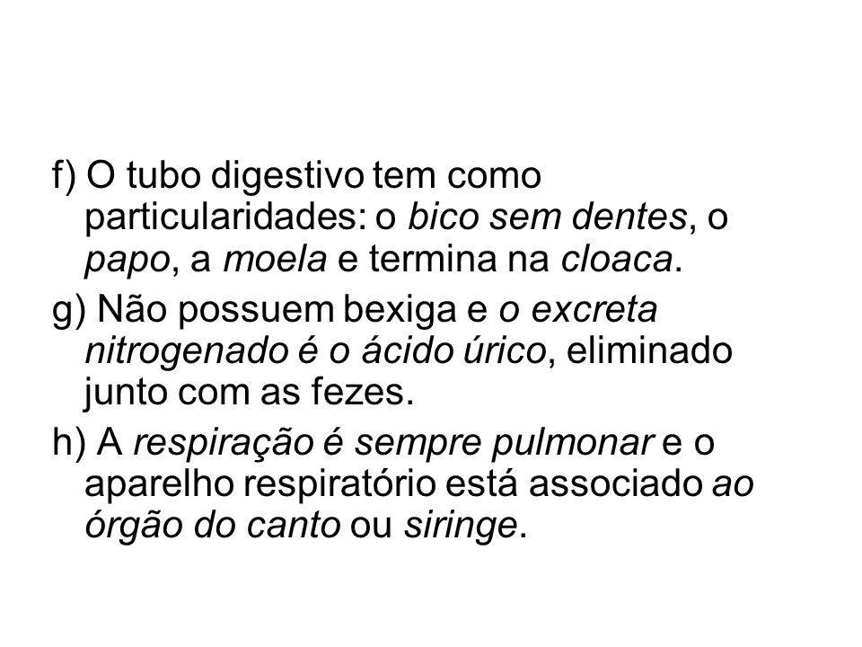 f) O tubo digestivo tem como particularidades: o bico sem dentes, o papo, a moela e termina na cloaca.