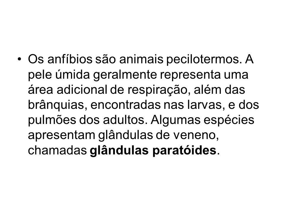 Os anfíbios são animais pecilotermos