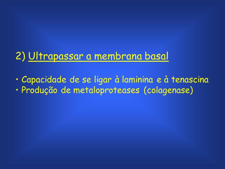 2) Ultrapassar a membrana basal