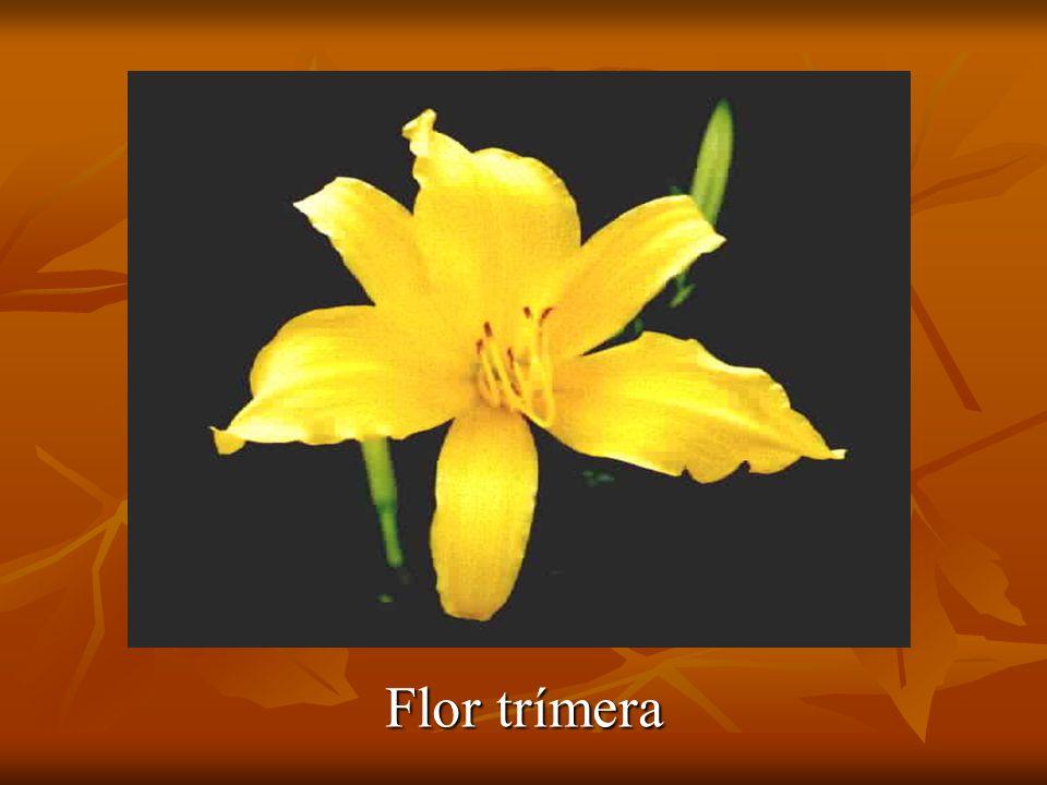 Flor trímera