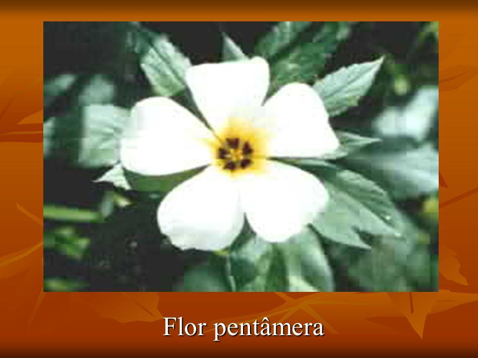 Flor pentâmera