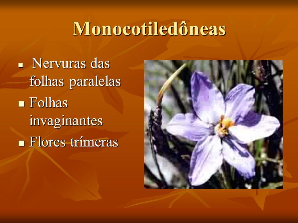 Monocotiledôneas Folhas invaginantes Flores trímeras