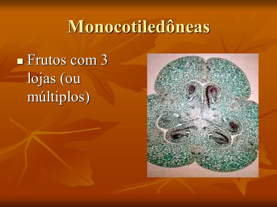 Monocotiledôneas Frutos com 3 lojas (ou múltiplos)