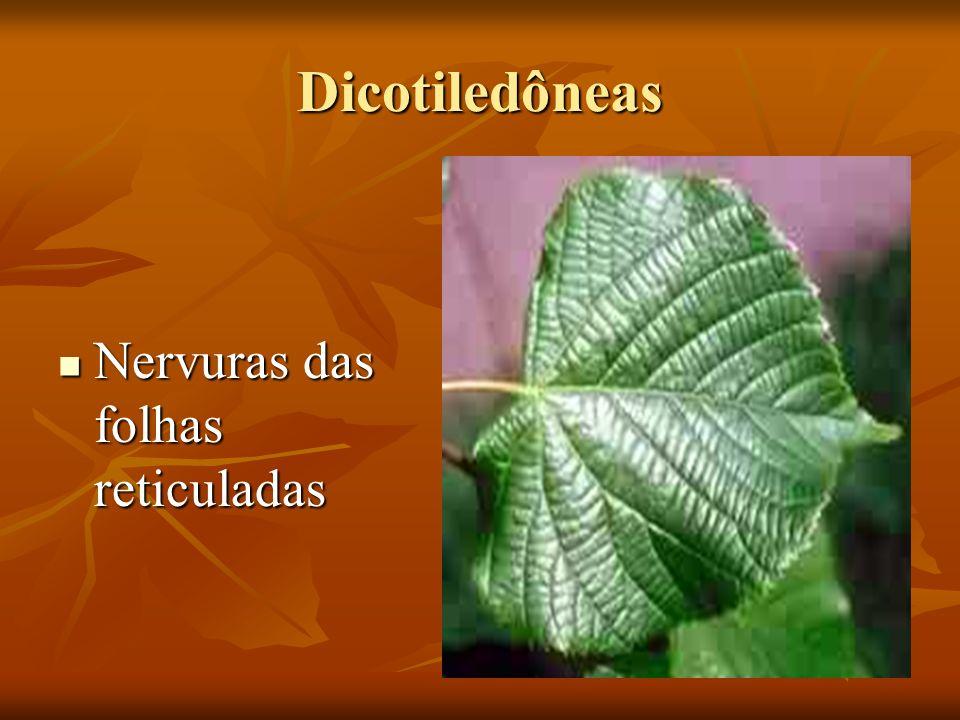 Dicotiledôneas Nervuras das folhas reticuladas