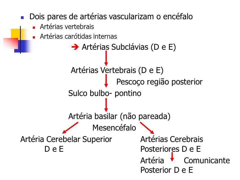 Dois pares de artérias vascularizam o encéfalo