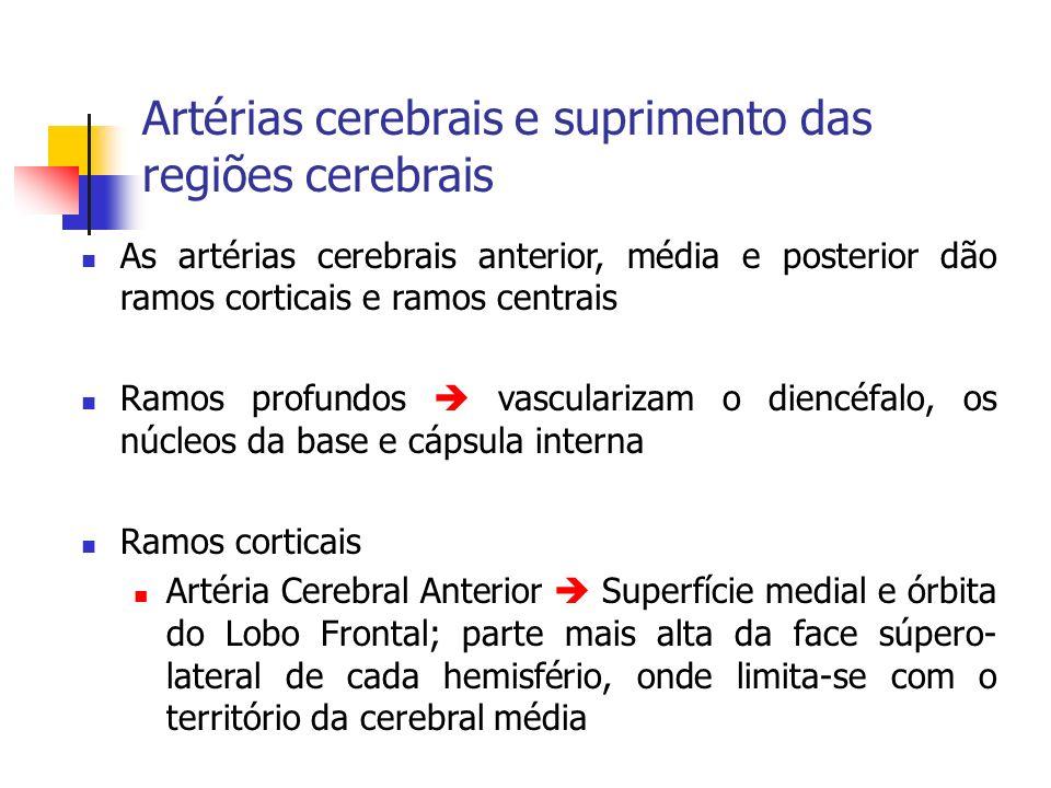 Artérias cerebrais e suprimento das regiões cerebrais