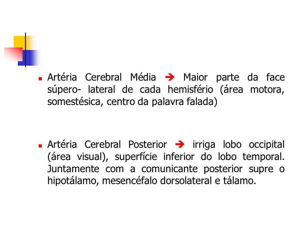 Artéria Cerebral Média  Maior parte da face súpero- lateral de cada hemisfério (área motora, somestésica, centro da palavra falada)