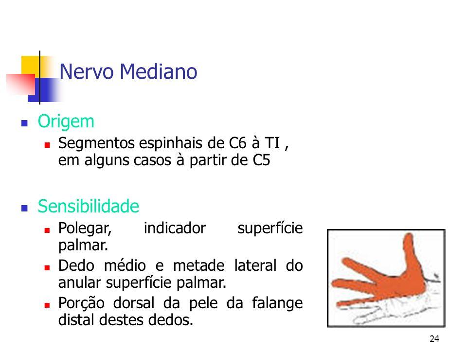 Nervo Mediano Origem Sensibilidade