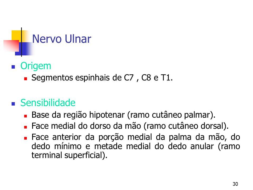 Nervo Ulnar Origem Sensibilidade Segmentos espinhais de C7 , C8 e T1.