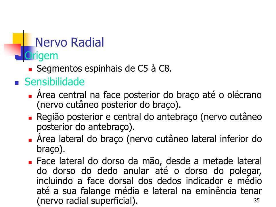 Nervo Radial Origem Sensibilidade Segmentos espinhais de C5 à C8.