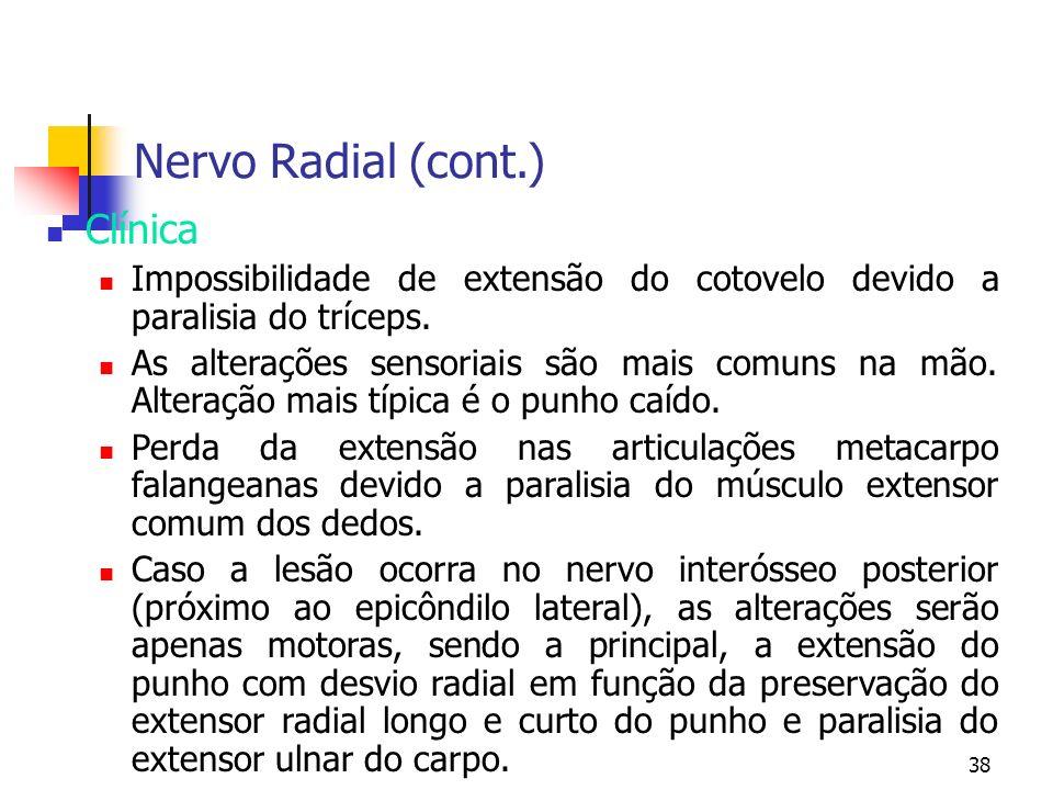 Nervo Radial (cont.) Clínica