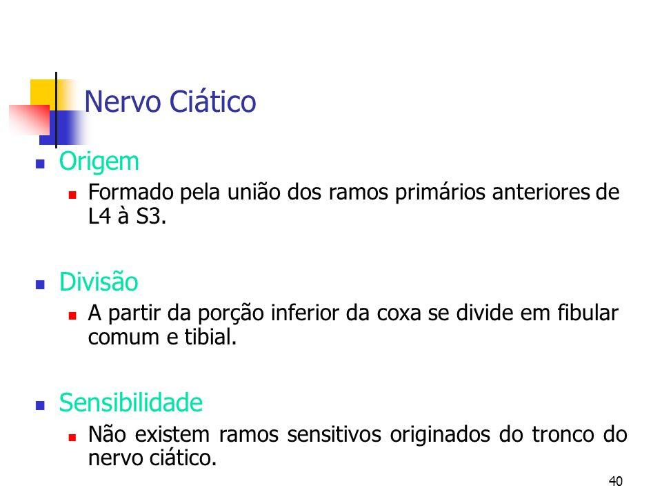 Nervo Ciático Origem Divisão Sensibilidade