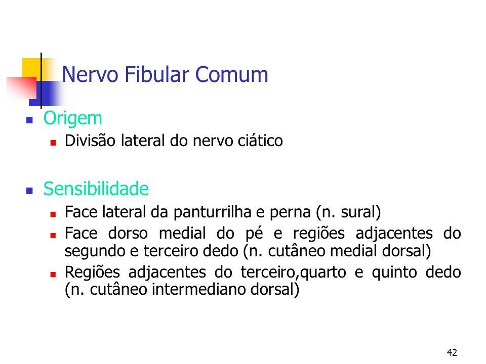 Nervo Fibular Comum Origem Sensibilidade