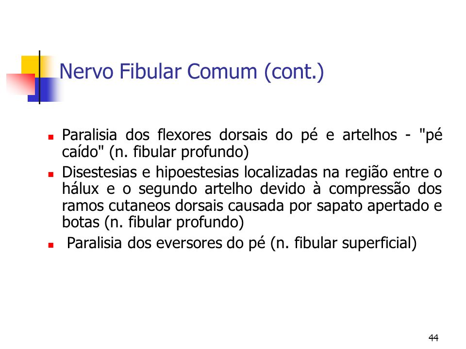 Nervo Fibular Comum (cont.)