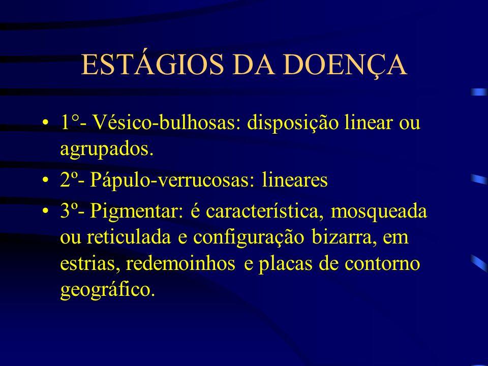 ESTÁGIOS DA DOENÇA 1°- Vésico-bulhosas: disposição linear ou agrupados. 2º- Pápulo-verrucosas: lineares.