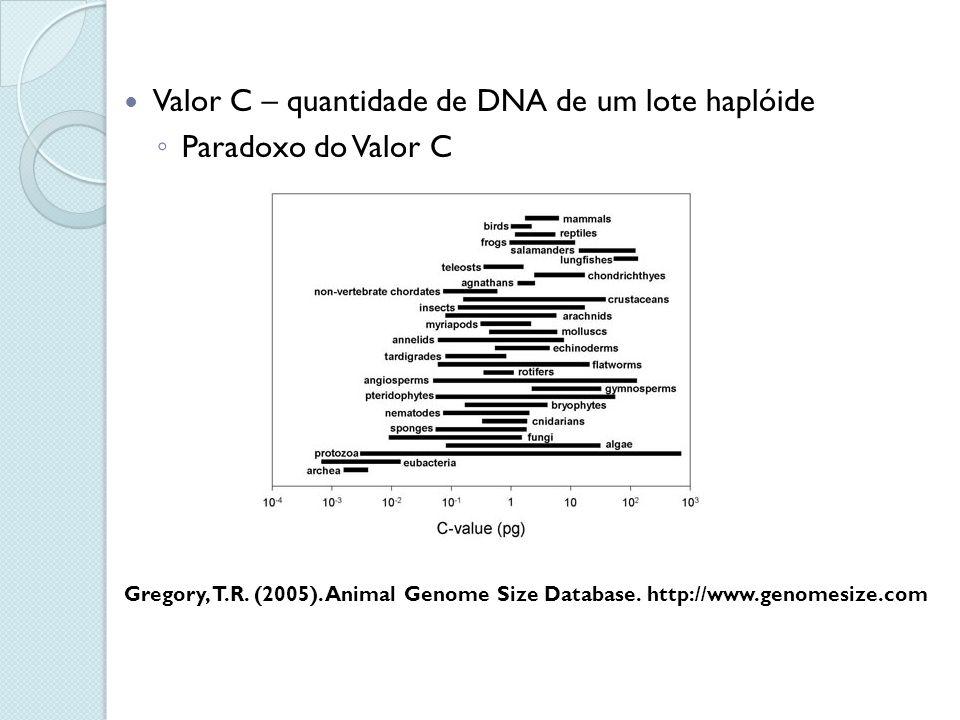 Valor C – quantidade de DNA de um lote haplóide Paradoxo do Valor C